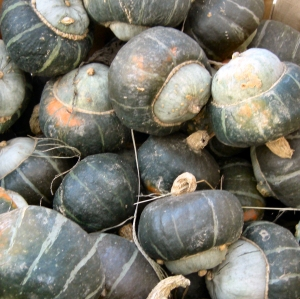 buttercupsquash